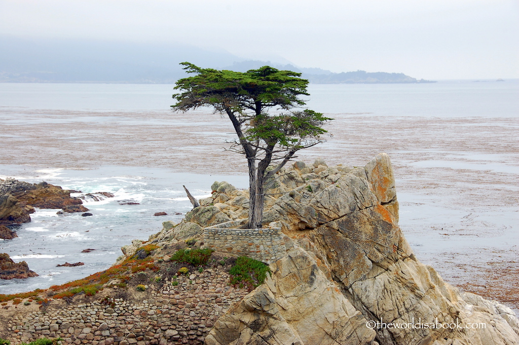 Lone Cypress Monterey