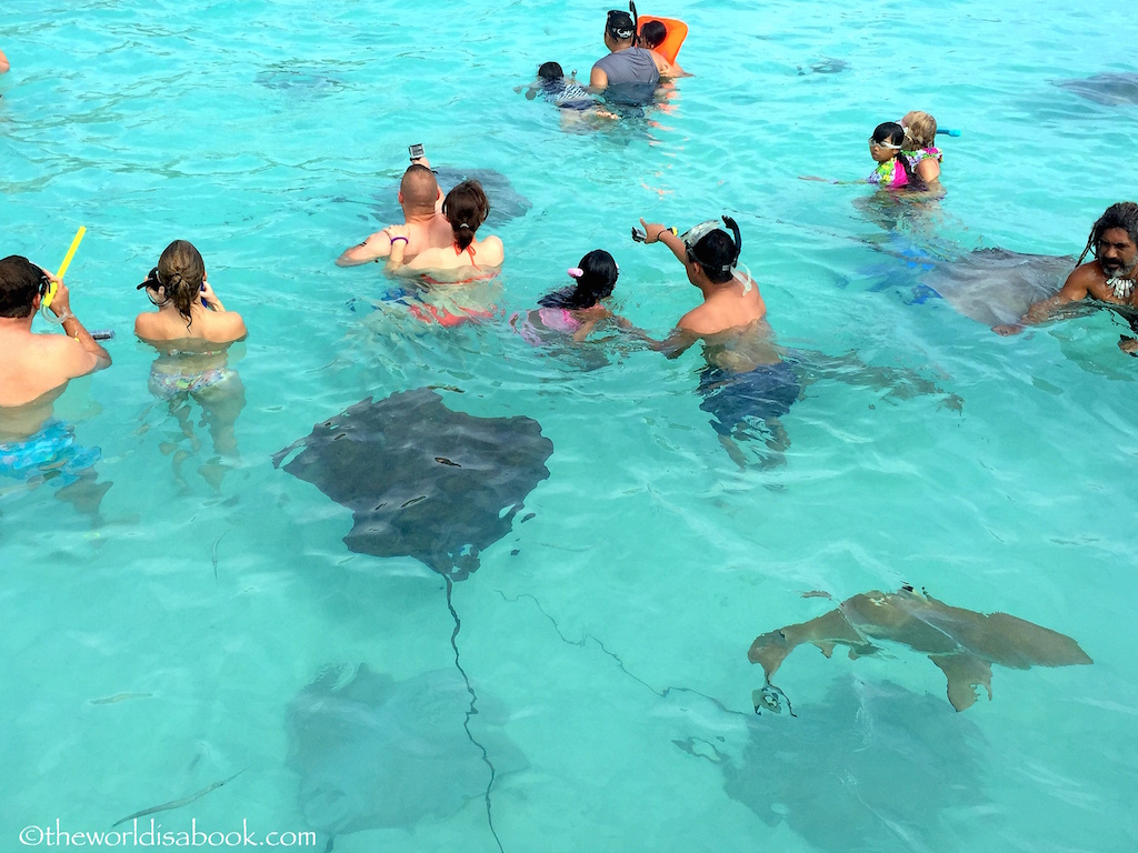 Moorea snorkeling with stingrays