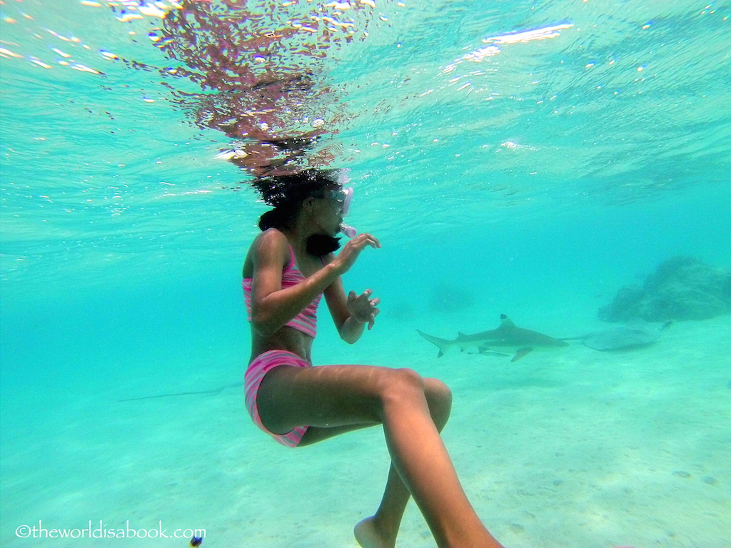 Snorkeling with sharks and stingrays in moorea the world for Fishing lessons near me