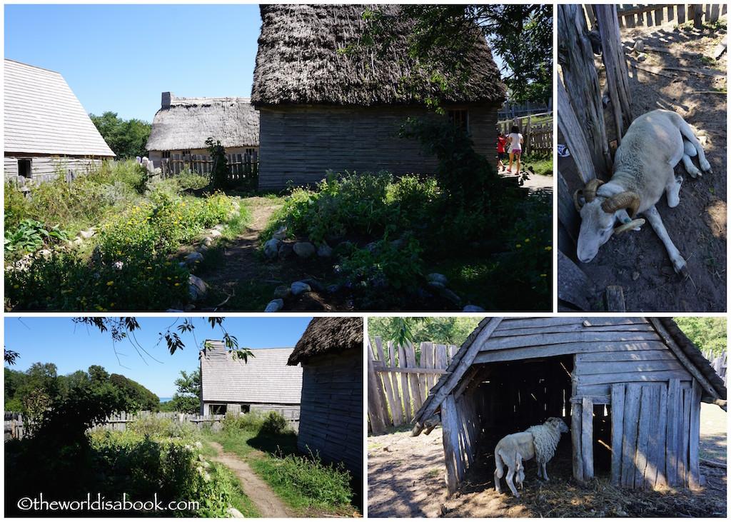 Plimoth Plantation livestock