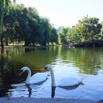 The Beauty of Boston Common and the Public Garden with kids