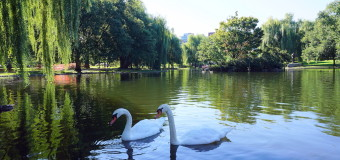 The Beauty of Boston Common and the Public Garden