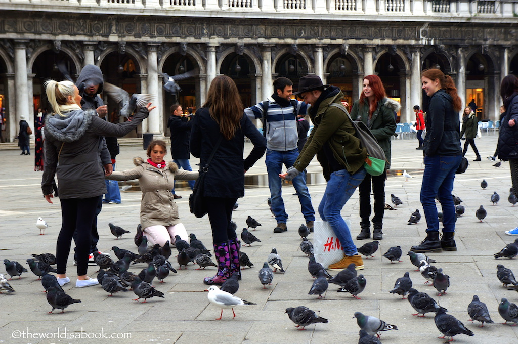 Venice Piazza San Marco pigeons