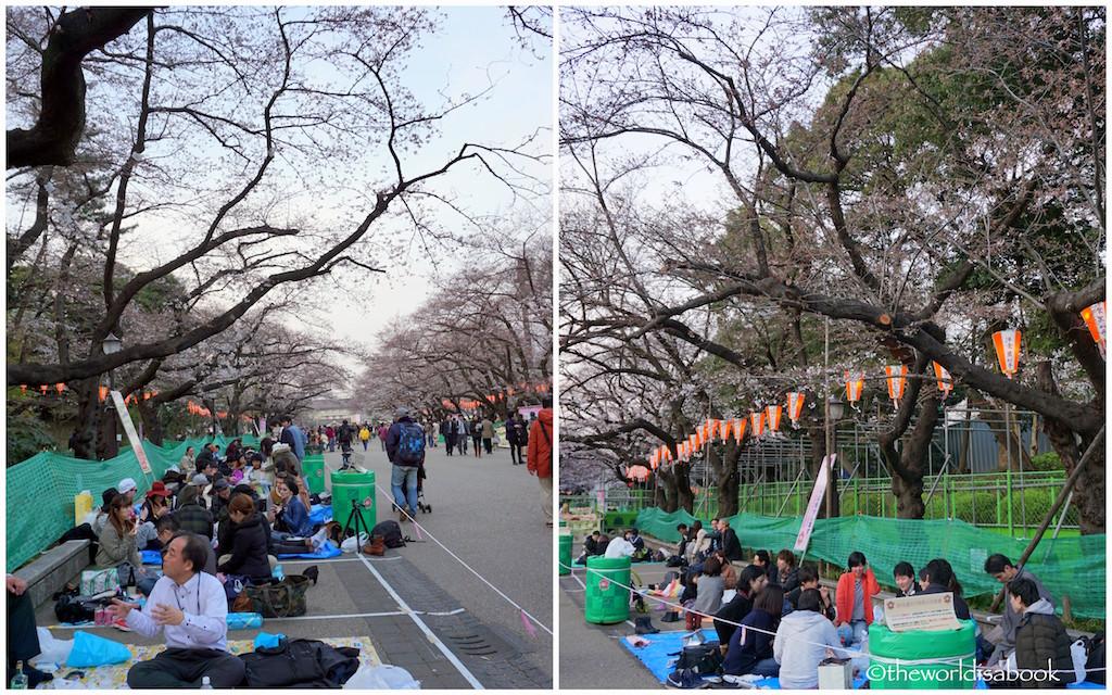 Cherry Blossoms Hanami Ueno Park