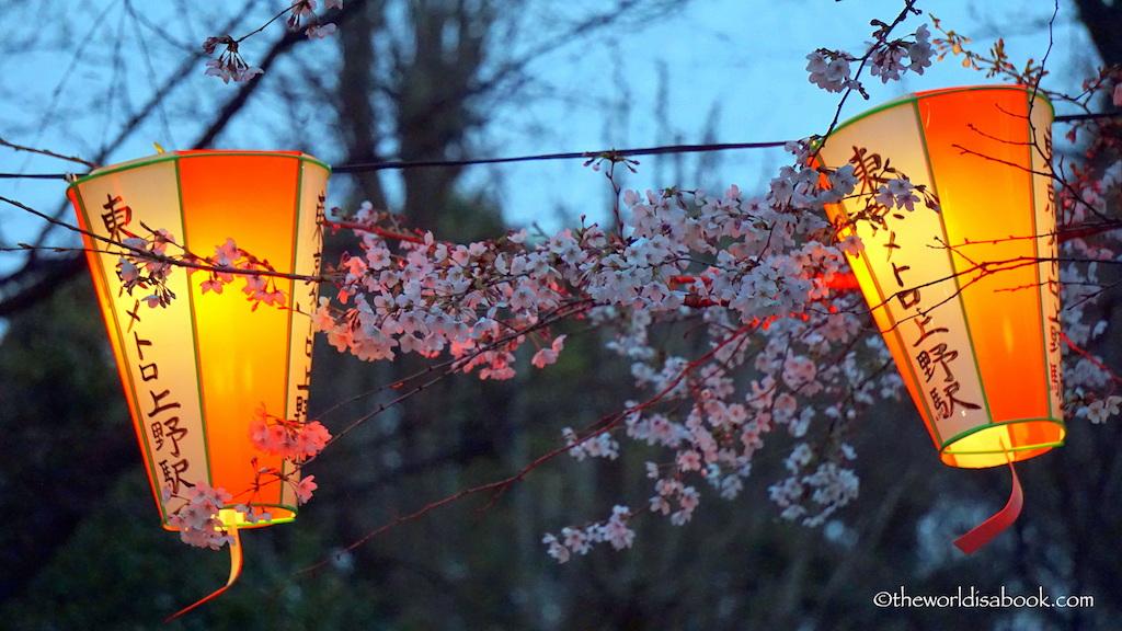 Night lanterns cherry blossom ueno park