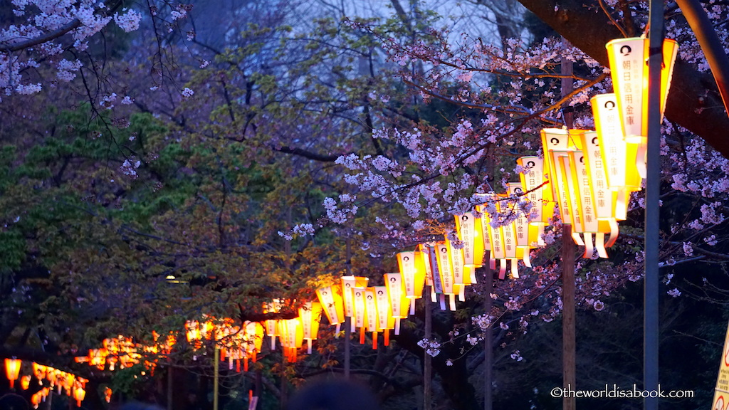 Ueno Park cherry blossom night lanterns
