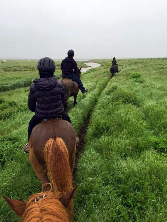 Iceland horseback riding tour