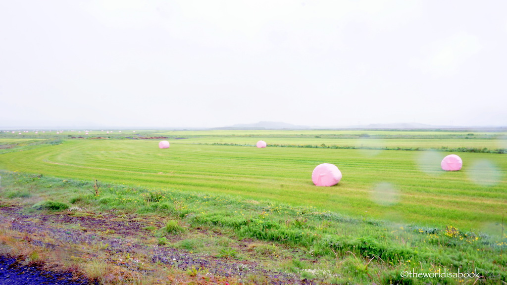 South Iceland pink hay roll