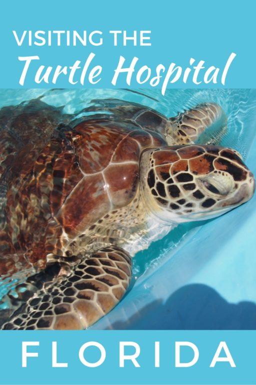 turtle-hospital-florida