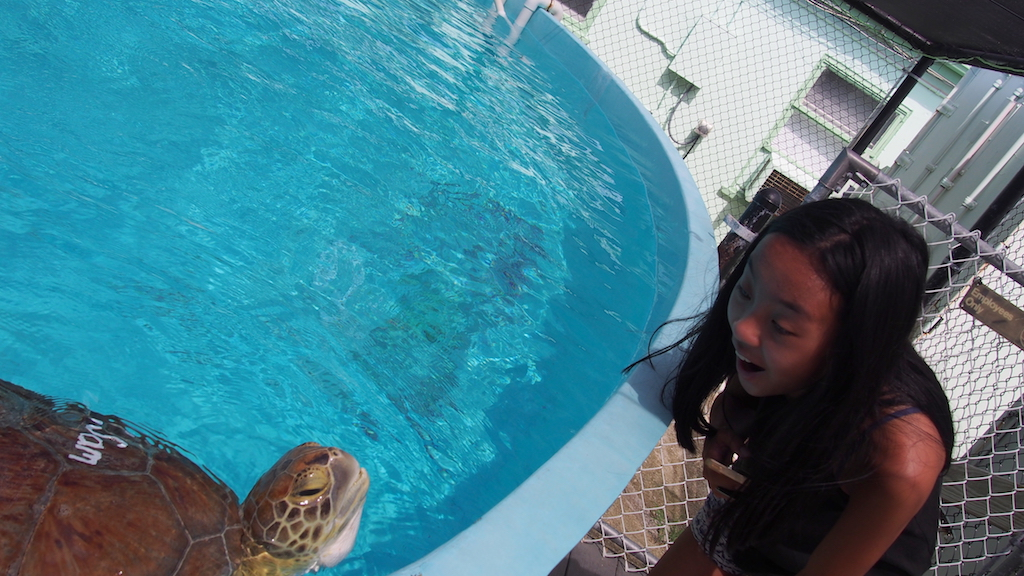 turtle hospital with kids