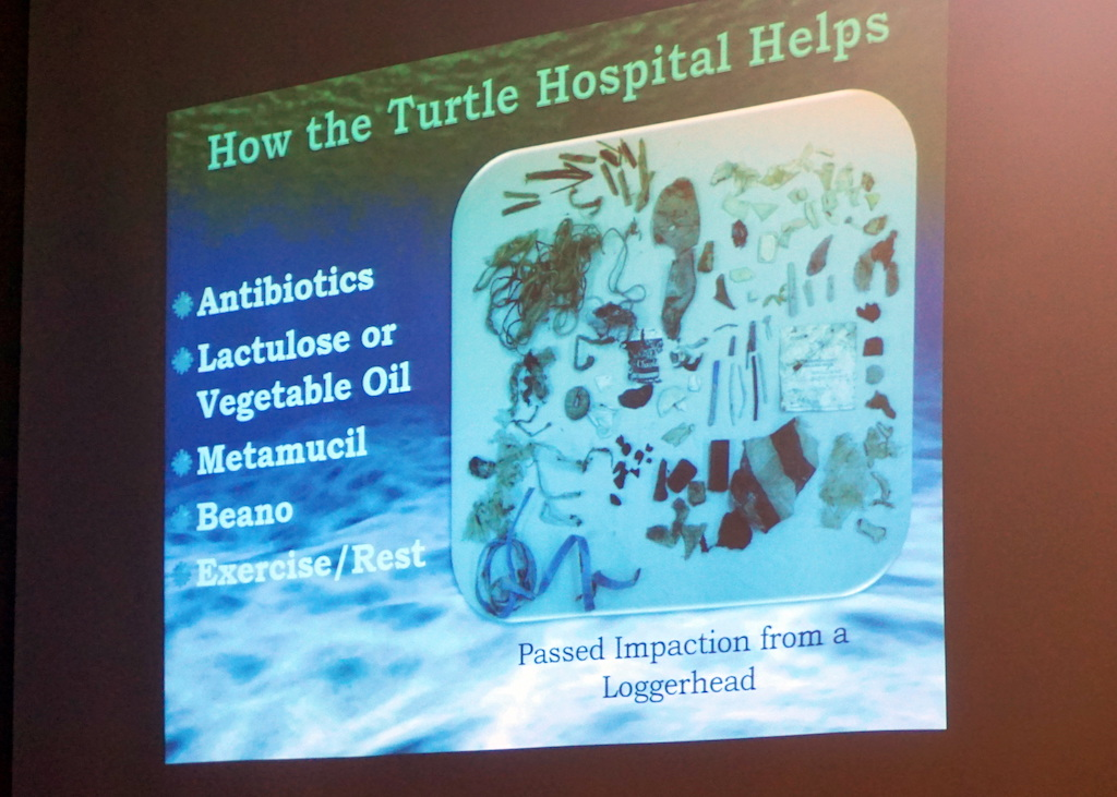 turtle-hospital-impaction