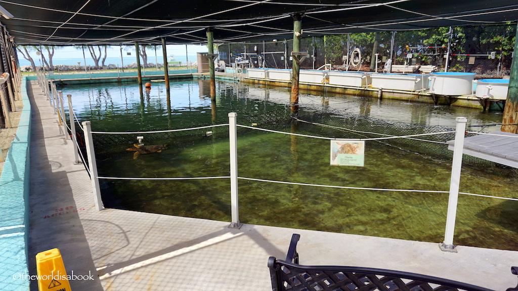 Turtle hospital pool