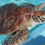Visiting the Turtle Hospital in the Florida Keys