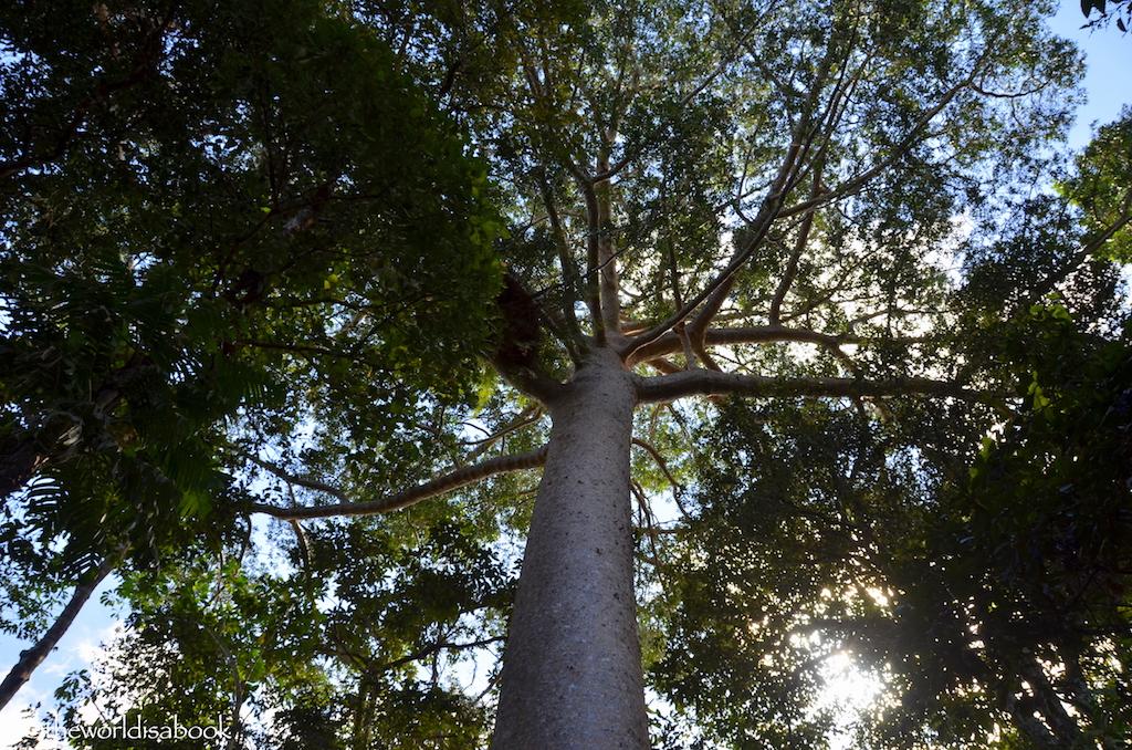 Cairns Nature Walk