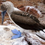 Tips for a DIY Land Based Galapagos trip