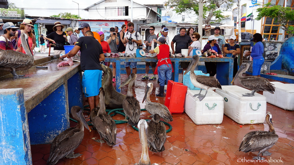 fish market santa cruz galapagos