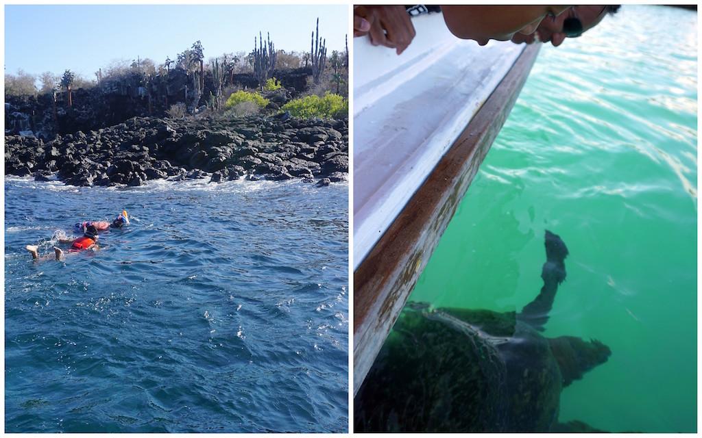 galapagos santa cruz snorkeling