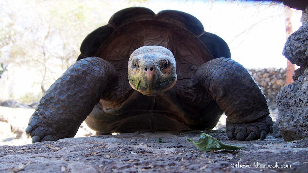 Charles Darwin Station tortoise Galapagos