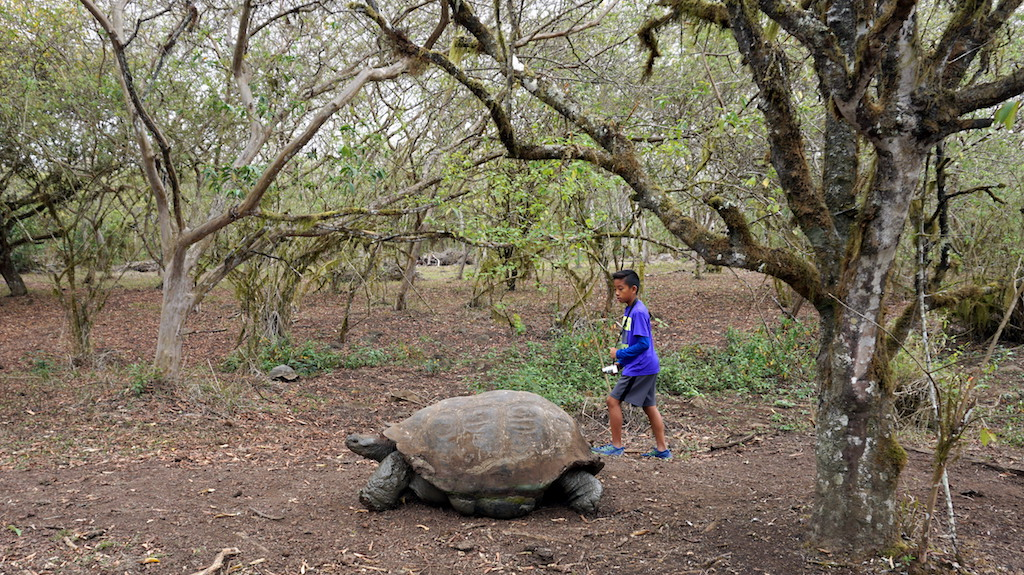 galapagos-with-kids-giant-tortoise