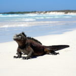 Highlights & Itinerary of a Land Based Galapagos Trip