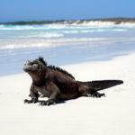 Highlights & Itinerary of a Land Based Galapagos Trip