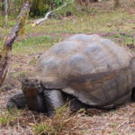 Encounters with the Galapagos Giant Tortoises