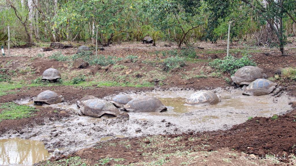 Rancho Primicias Giant tortoise pond