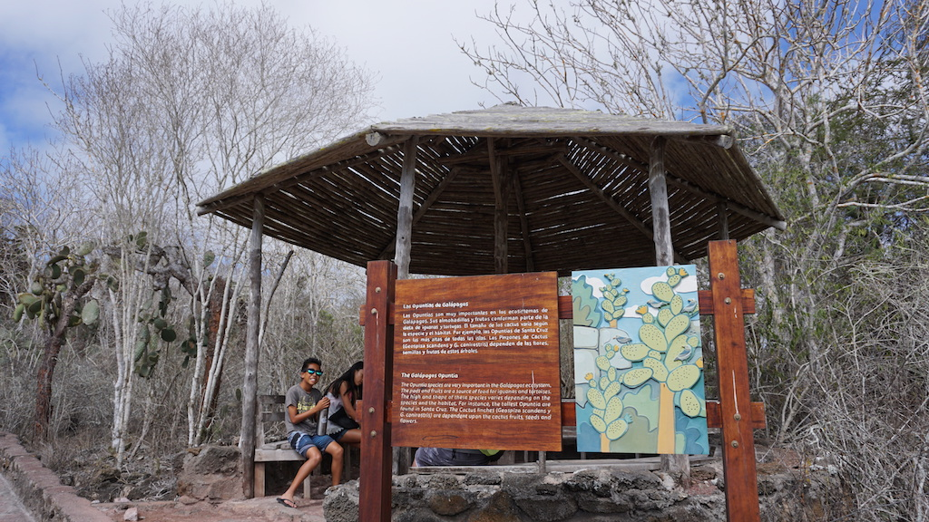 Tortuga Bay pathway gazebo