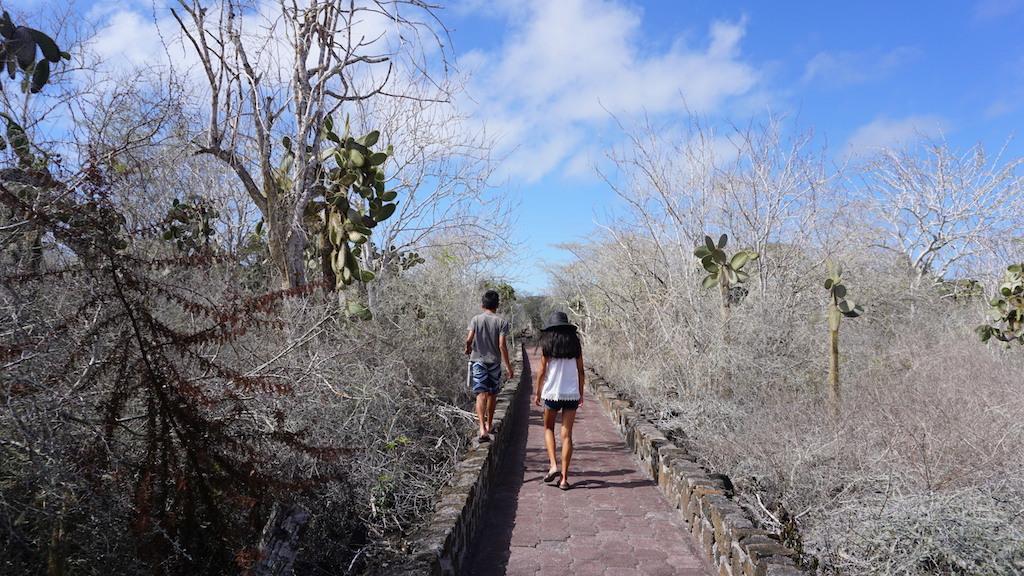 Tortuga Bay pathway