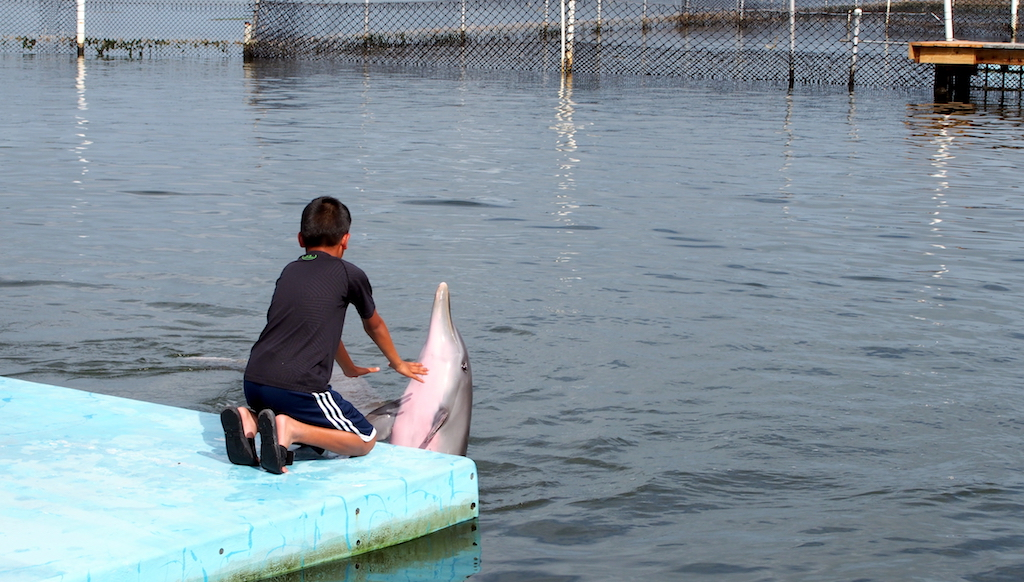 Dolphin Research Center with kids