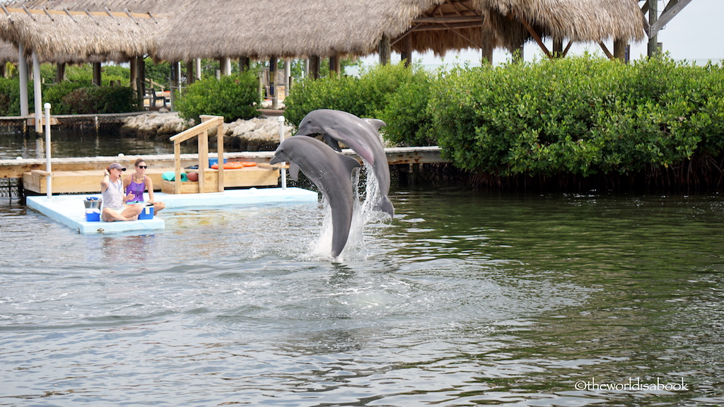 Jumping dolphins at Dolphin Research Center