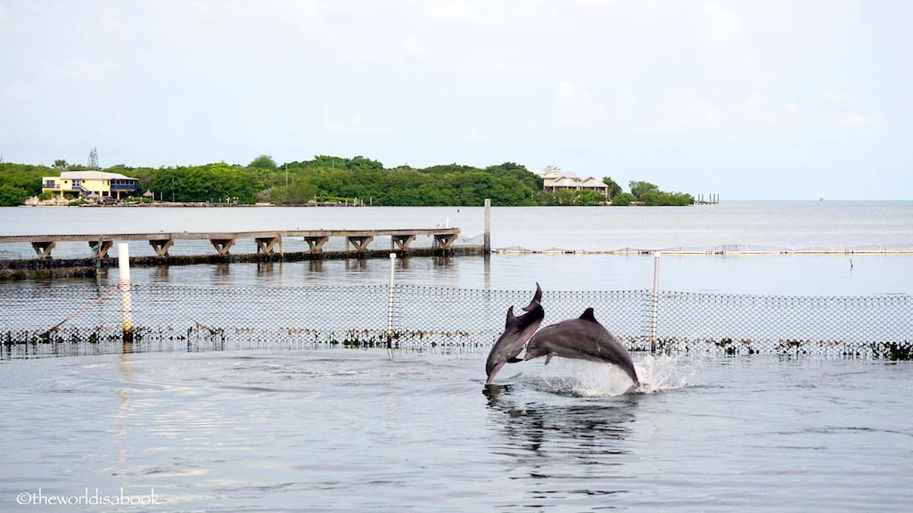 dolphin Research Center Florida