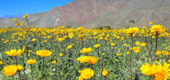 Viewing Desert Blooms & Metal Art at Borrego Springs, California