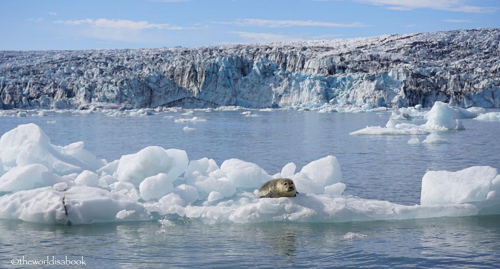 Seal at Jokulsarlon Glacier Lagoon