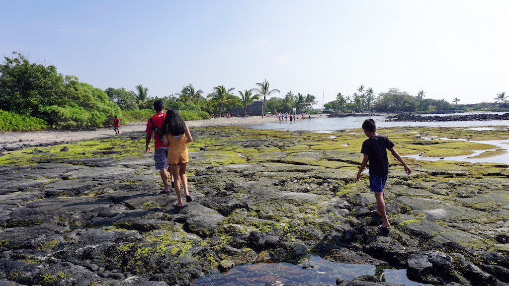 Kaloko Honokohau tide pools with kids