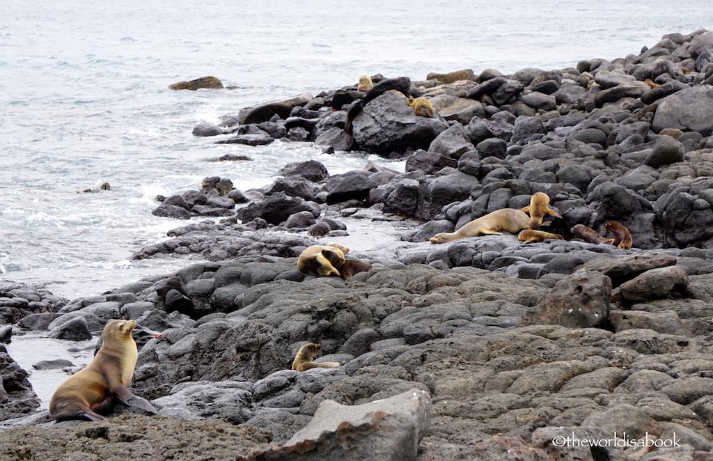 Galapagos North Seymour Island sea lions