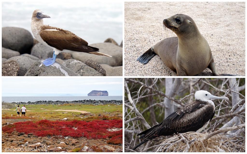 North Seymour Island Galapagos wildlife