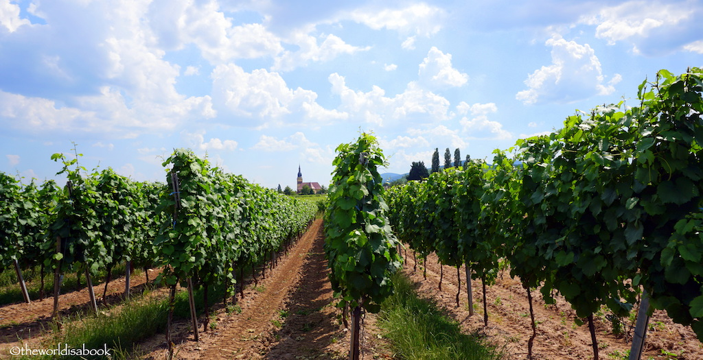 France Alsace vineyards
