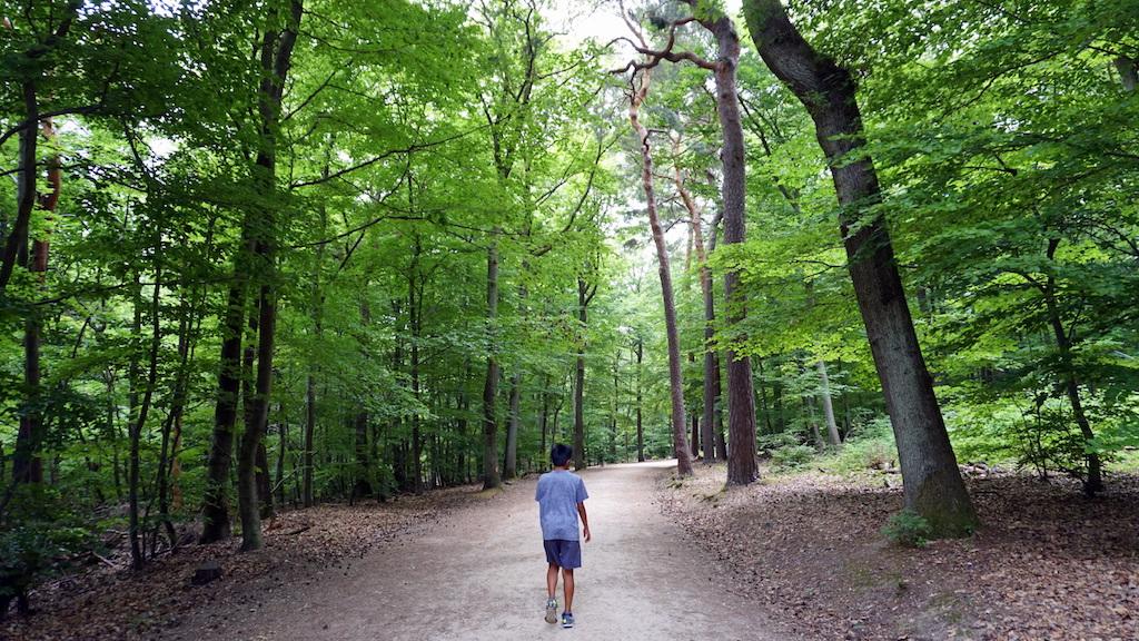 Niederwald landscape park