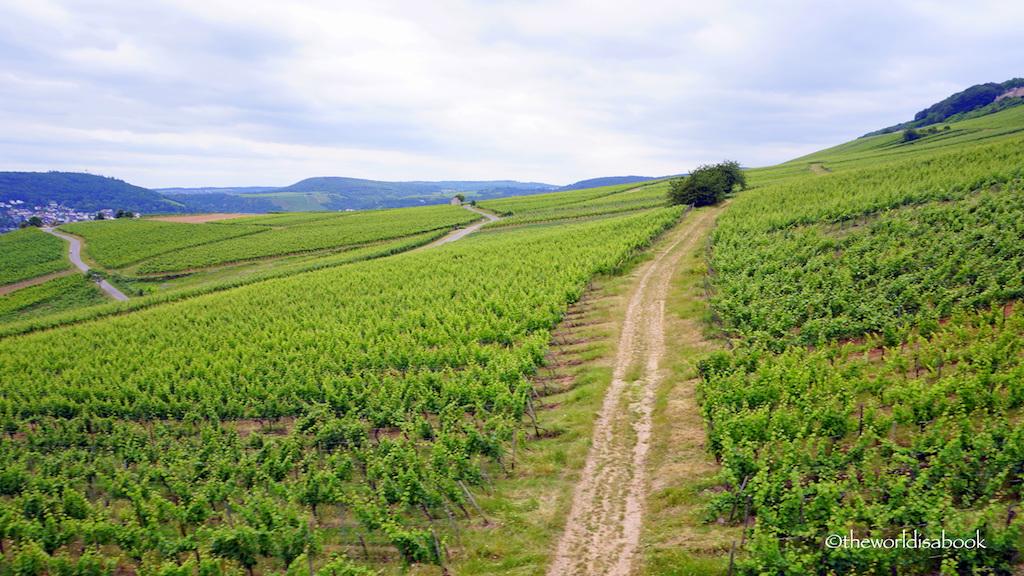 Rudesheim vineyards Germany