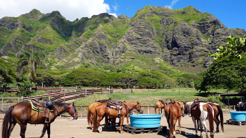 Kualoa Ranch horses