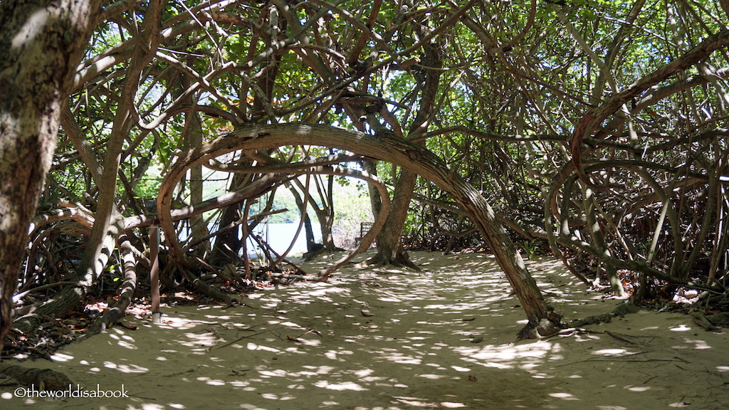 Oahu Secret Beach mangrove