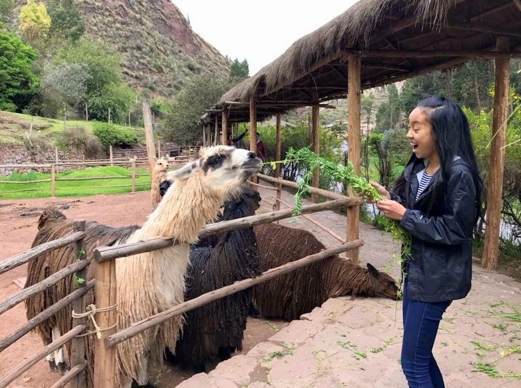 Peru with Kids Awanacancha llama