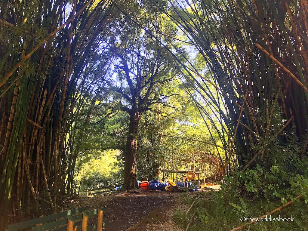 Kauai Bamboo Grove